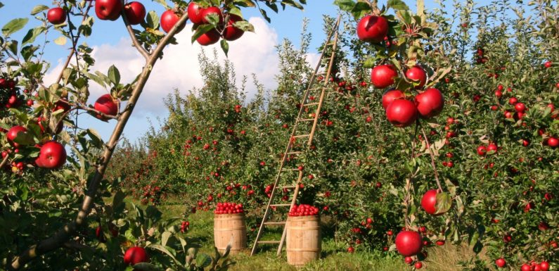 Enormous Apple Benefits