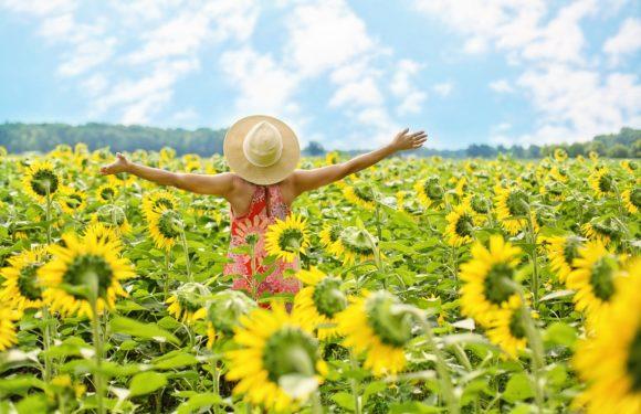 Yogi Morning Habits For Healthy Life